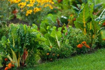 3 Space-Saving Backyard Vegetable Garden Ideas