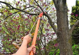 How to Avoid Injury Using an Extendable Pruning Saw for Garden Cleanup