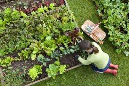 5 Raised Bed Vegetable Garden Layout Tips & Tricks