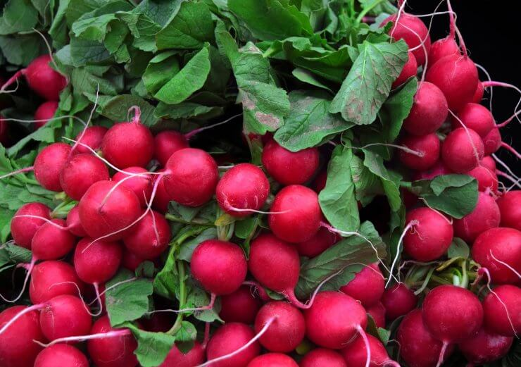 easiest fruits and vegetables to grow