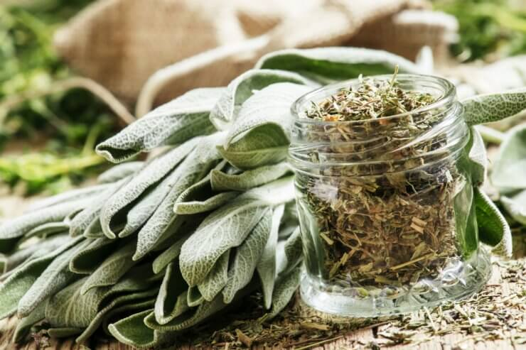 Preserving Sage for Culinary Purposes.