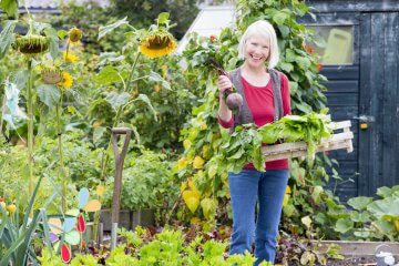 5 Ideas for Shading Plants from Sun in a Vegetable Garden