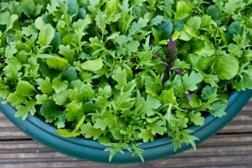 7 Shallow Root Vegetables That Grow Great in Containers and Tough Spots