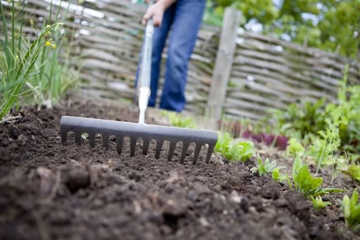 Raking the garden to prepare soil for planting