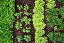17 Quick Growing Vegetables For Restless Gardeners