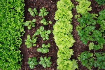 17 Quick Growing Vegetables For Restless Gardeners