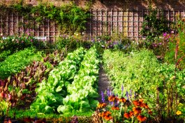 What's Actually IN Organic Fertilizer for Vegetables and Can You Make it Yourself?