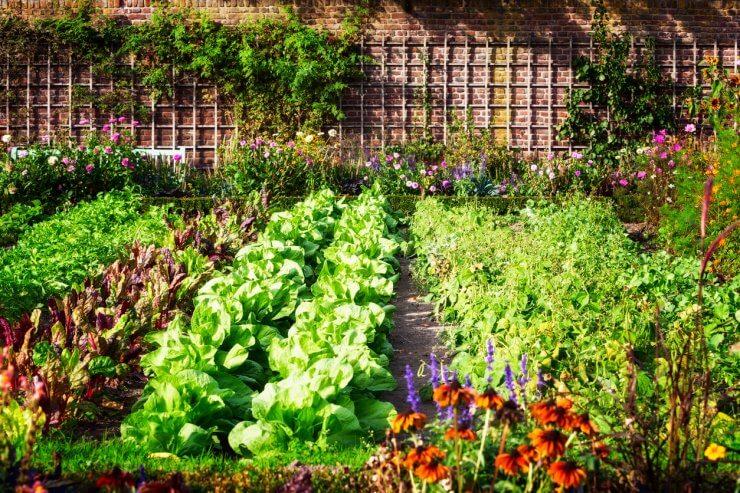 Organic Fertilizer for Vegetables