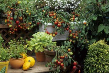 The Easiest Vegetables to Grow in Pots