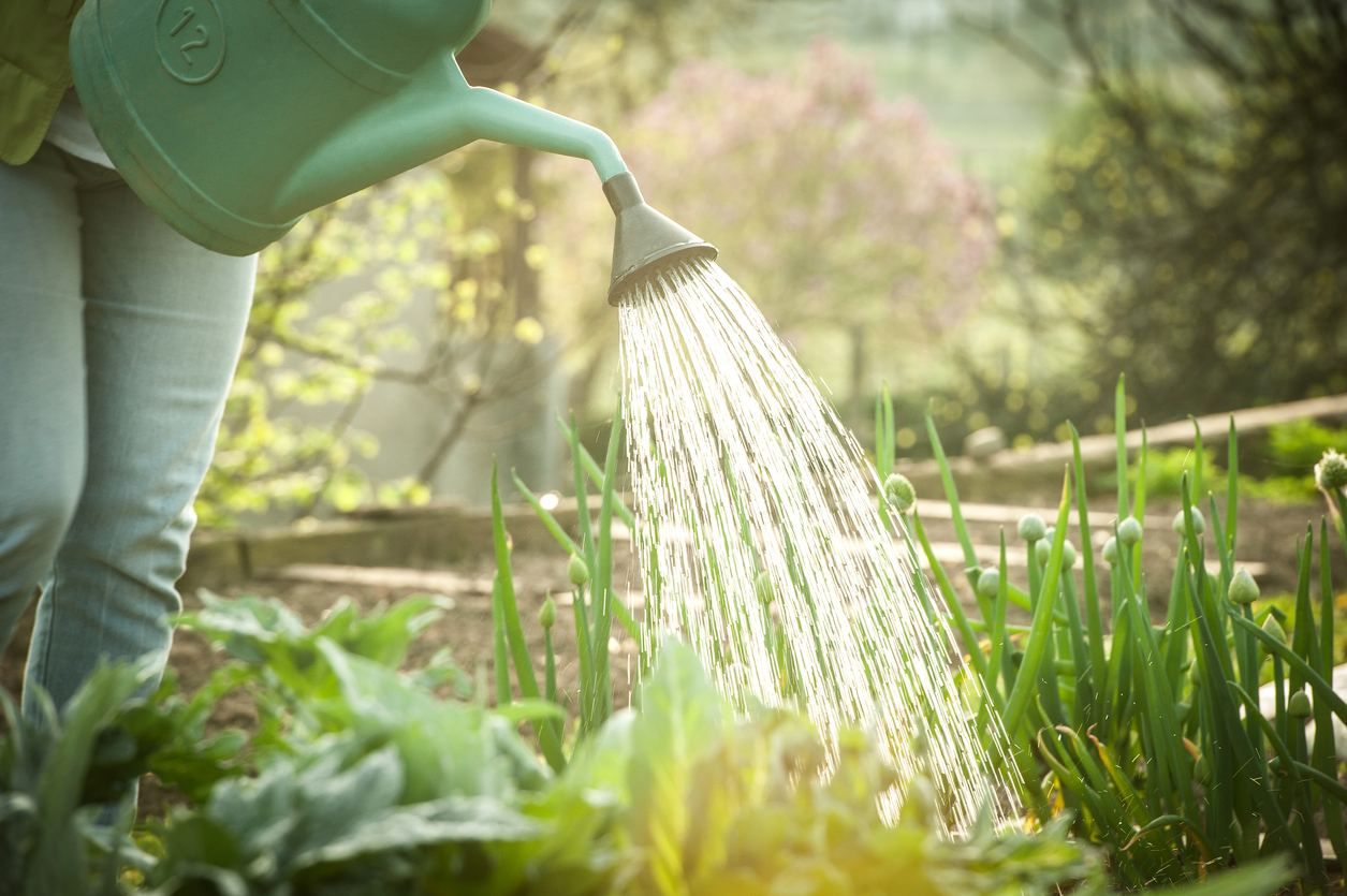 best times to water plants