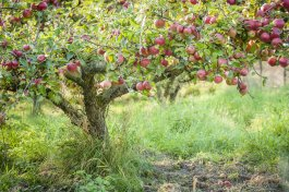 Fertilizing Fruit Trees: Why, How, and When to Start
