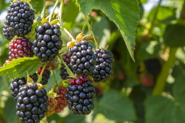 easy fruits to grow in pots