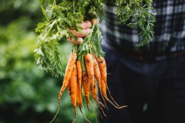 7 Common Vegetables that Should Not be Planted Together