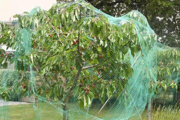 5 Tips for Protecting Fruit Trees from Deer and Other Wildlife