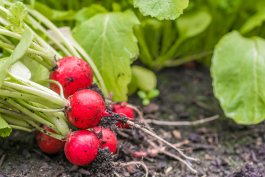 How to Make the Best All-Purpose Plant Fertilizer with 3 (or Fewer) Simple Ingredients