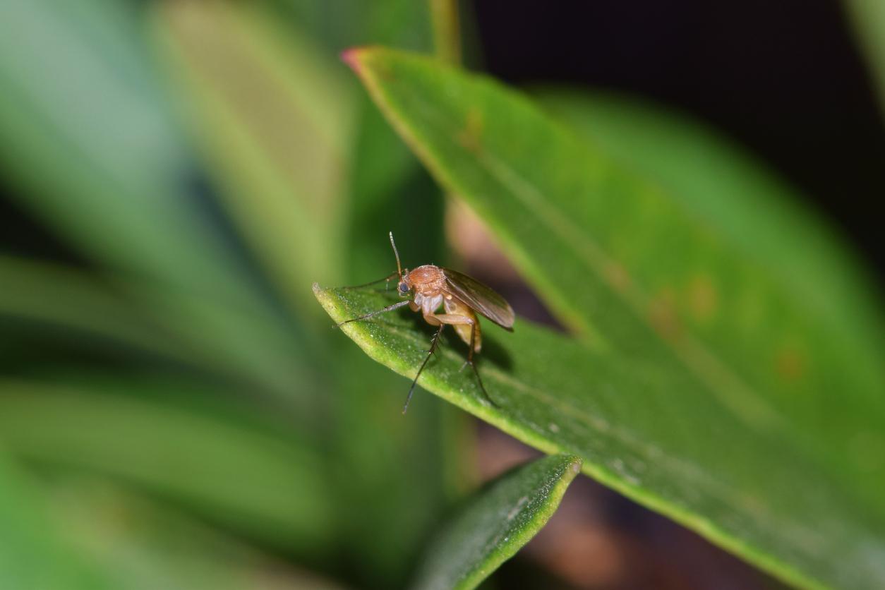 flies eating plants
