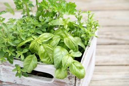 10 Tips for Harvesting Herbs to Eat