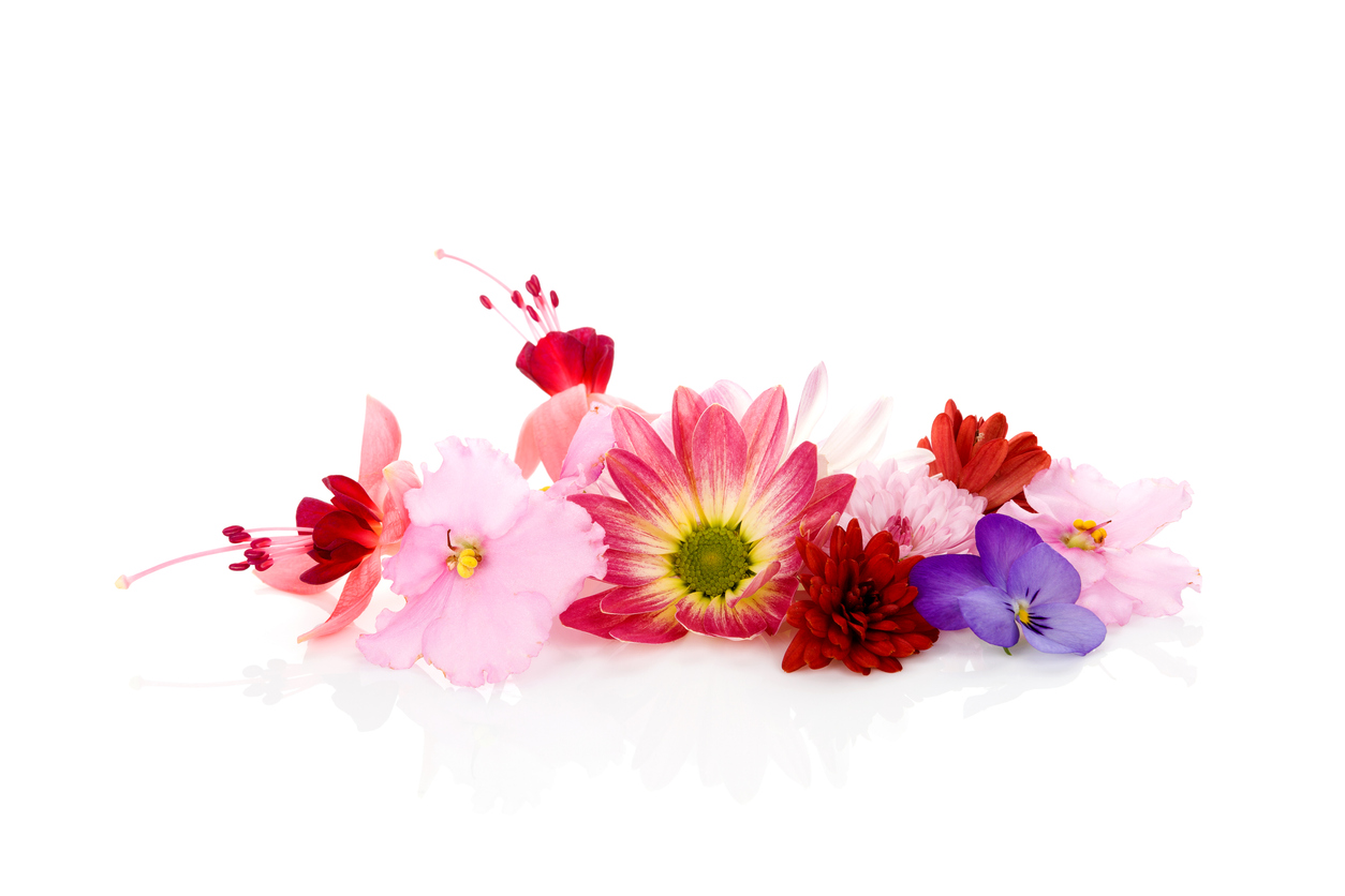 Flowers to Plant with Herbs