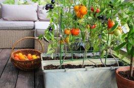 Vegetable Garden Box Advice for a Making a Container Garden