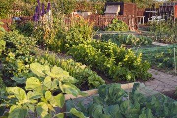 How to Plan an English Vegetable Garden