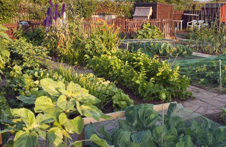 English vegetable garden