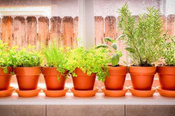 How to Make Homemade Fertilizer for Indoor Herbs