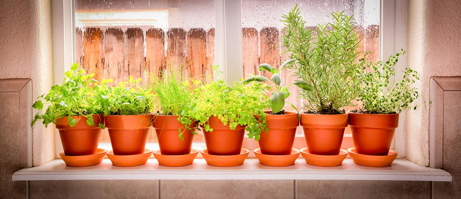 Homemade Fertilizer for Indoor Herbs