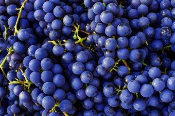 Cabernet Sauvignon grapes.