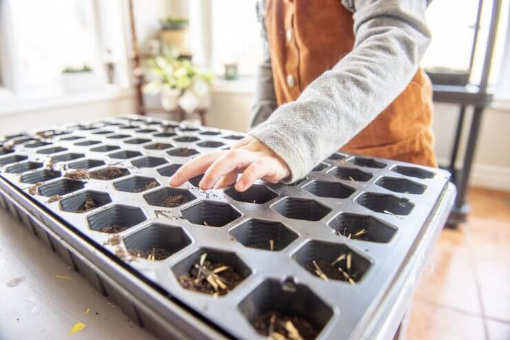 indoor plant growing kits