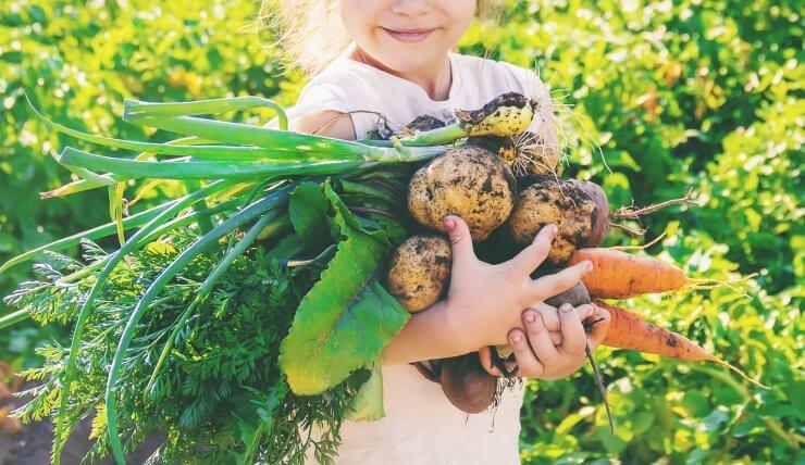 kid picking veggies