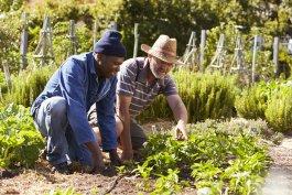 How to Start a Community Vegetable Garden