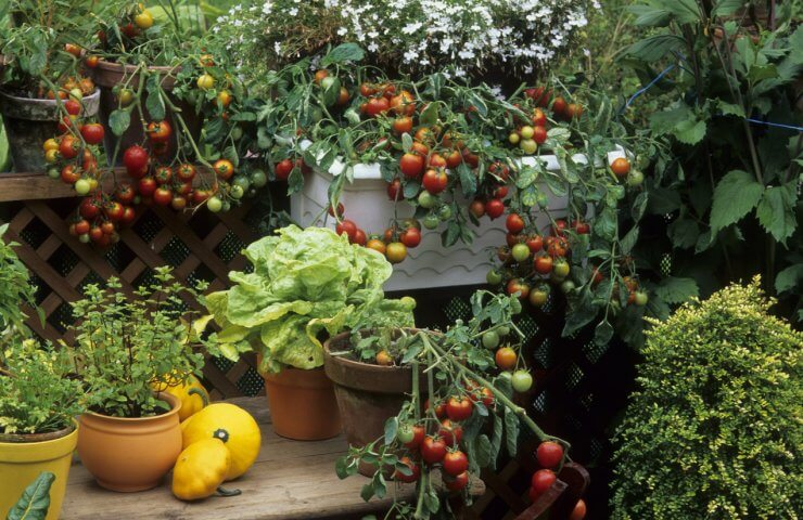 grow your own food at home