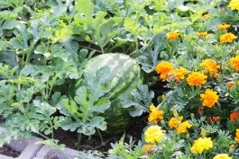 Can You Build a Garden Bed on Concrete? 5 Ways to Prep Before You Plant