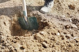 5+ Soil Additives to Improve Drainage in Soggy Gardens