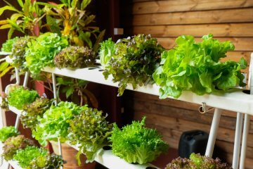 Why Growing Hydroponic Produce is Beneficial for Home Chefs