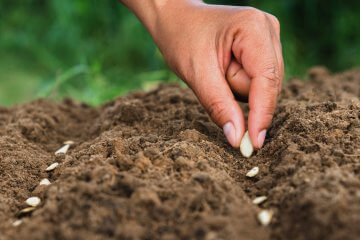 5 Mistakes to Avoid When Starting Seeds Outdoors