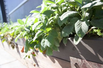 Making Food-Safe DIY Window Box Planters Fit for a Home Chef