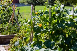 How to Build a DIY Vegetable Trellis from Recycled Materials