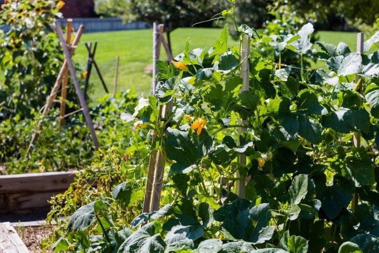 diy vegetable trellis