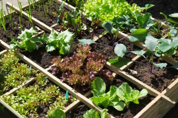 10 Helpful Plants for Bug Control in Your Kitchen Garden