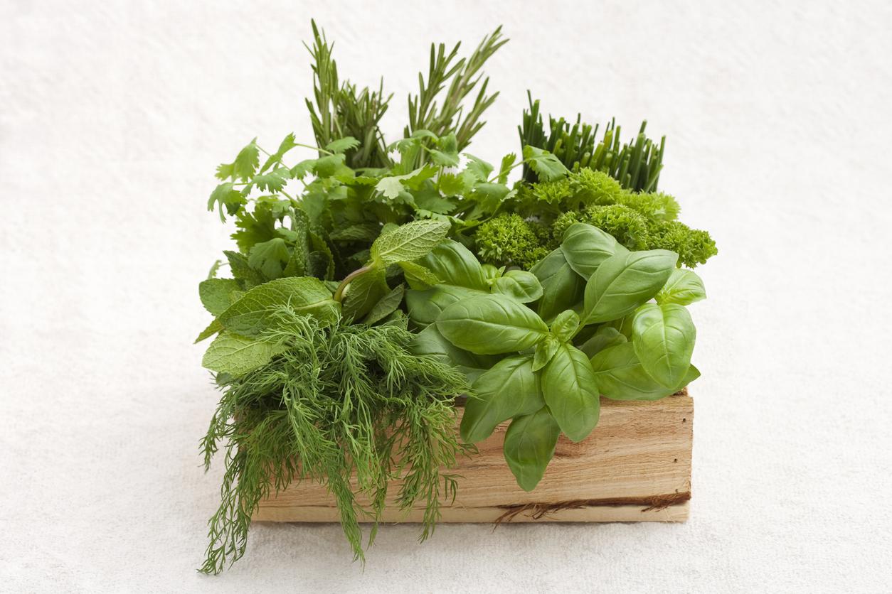 Mediterranean herb box garden
