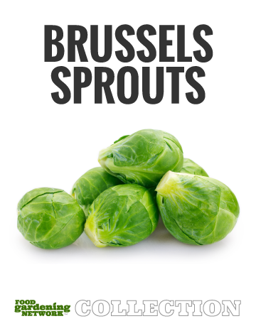 Food Gardening Network Brussels Sprouts Collectionc