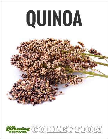 Food Gardening Network Quinoa Collection