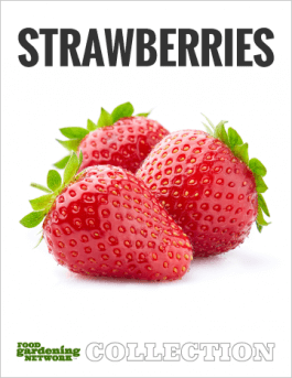 How to Grow Strawberries from Seed or Bare Roots