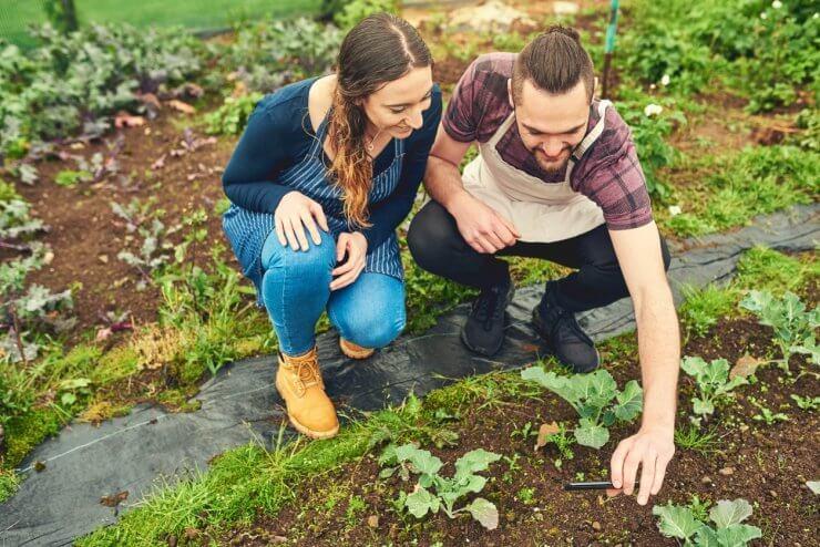 Best Vegetable Gardening Instagram Accounts