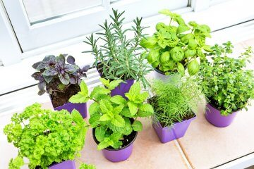 An Intro to Growing Herbs and Vegetables Indoors