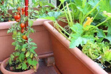 How to Mix Your Own Potting Soil for Container Vegetables