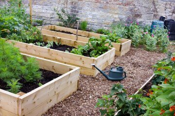What's the Best Type of Wood for Raised Beds?