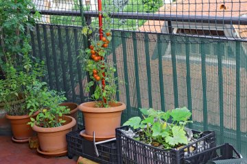 How to Keep Your Balcony Vegetables Safe from Critters