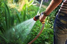 5 Veggie Garden Hose Watering Mistakes